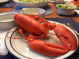 Hummer kochen (Maine Lobster)